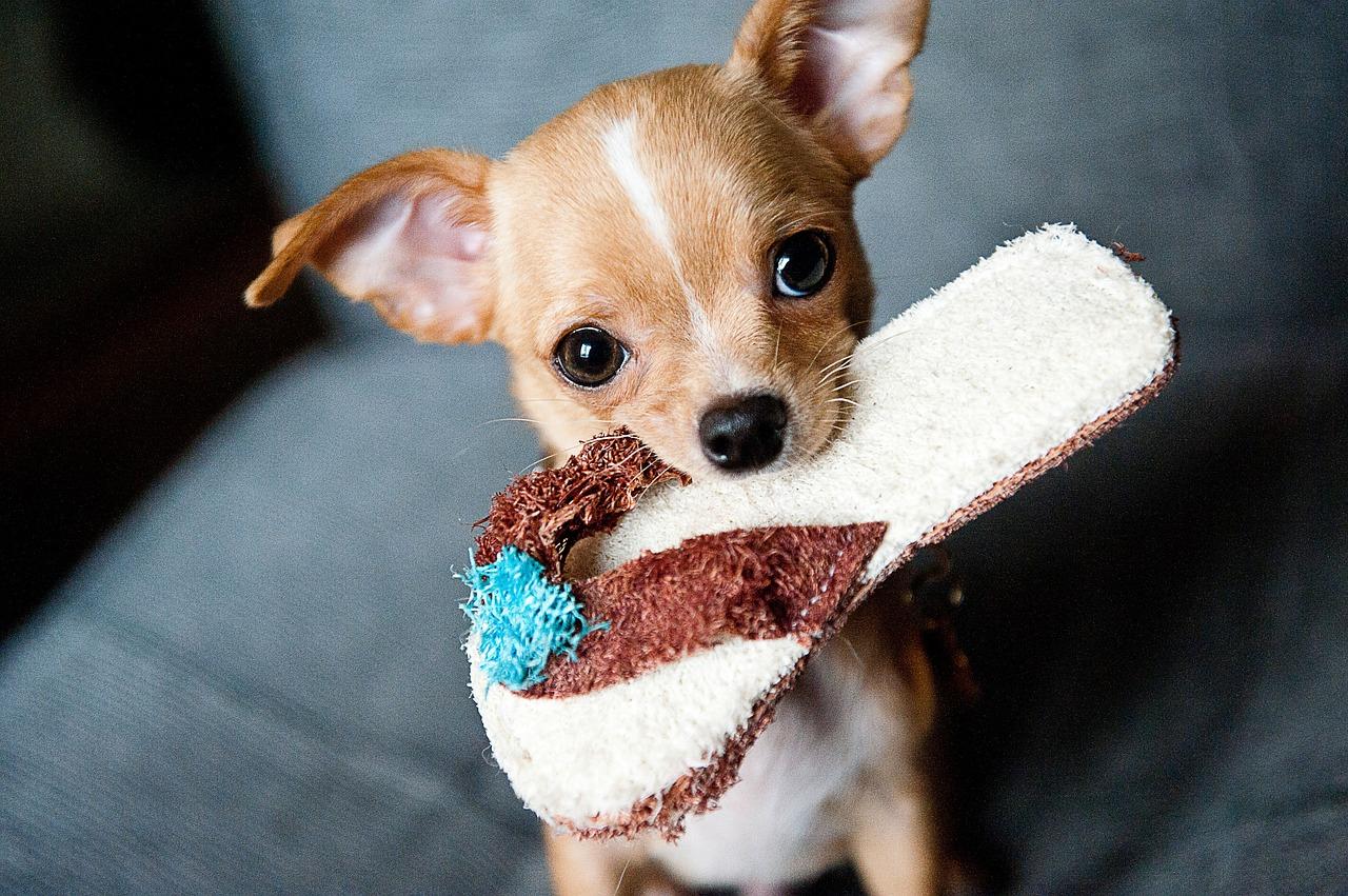 מודיעין חנות חיות באינטרנט – שופינג לכלב החדש OI-17
